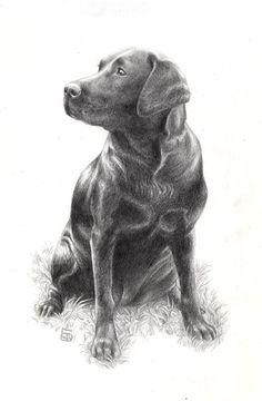 Black Labrador by Bergholtz.deviantart.com