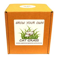 Grow Your Own Cat Grass Plant Kit - Planting kit for children and adults Cat Grass, Garden Gifts, Grow Your Own, Planting, Fathers Day, Kit, Children, Birthday, Christmas