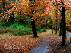 www.jamesatruett.com - Fall colors drape the tree-lined entrance path to Muckross House and Gardens in Killarney, County Kerry, #Ireland. This image is a colored art pencil interpretation of one of my photographs.