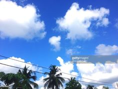 Stock Photo : Low Angle View Of Palm Trees Against Blue Sky