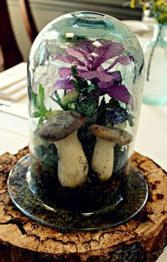 "Terrarium centerpiece created by Bett Wilson Foley for a woodland-themed wedding reception. ""Inside I installed Kale, giant Oyster mushrooms, succulents, Muscari, Fritillaria, and moss."" Fearrington Village, Pittsboro NC. #FearringtonVillage"