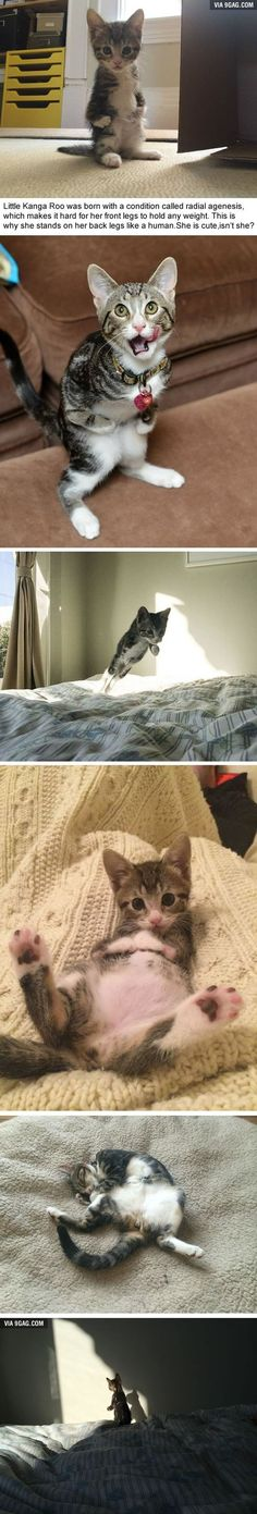 funny animal pictures, cat memes, Just like cat, funniest animals, cat fun, cat funny, cat, cats, cat cute, cat stuff, pretty cats, beautiful cats