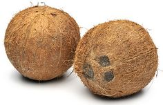 coconut_nut