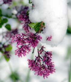 Mother's Day snow - Littleton,CO Outdoor Photography, Landscape Photography, Nature Photography, Amazing Photos, Great Photos, Travel Photos, Ski, Colorado, Photographs
