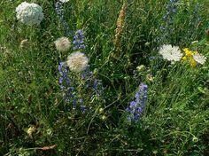 [Blog] Was hilft gegen Unkraut im Garten? 10 gute Tipps - http://www.garten-freunde.com/10-tipps-tricks-gegen-unkraut-im-garten/2266