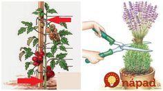 Najlepšie rady a tipy do záhrady na leto. Leto, Plant Hanger, Gardening, Plants, Outdoor, Vegetables, Outdoors, Lawn And Garden, Vegetable Recipes