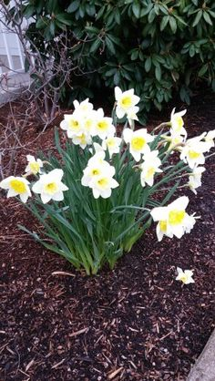 A sure sign of Spring!