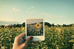 Valóság vs. Polaroid - Reality vs. Polaroid
