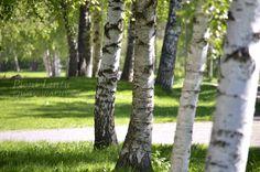 http://pienilintu.blogspot.fi/2013/06/the-beauty-of-finnish-summer.html