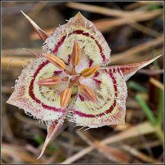 Flores Exóticas, Belas e Raras