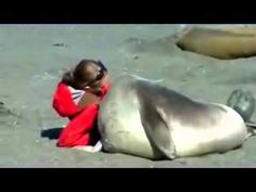 This elephant seal is adorably enamored with this woman on the beach. Watch their interaction with each other. This is filmed at Gold Harbour in South Georgia Island, which is East of the Southern tip of South America.