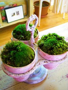lush green moss in tiny pots