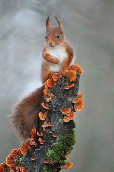 Squirrel - adorable and very cute.