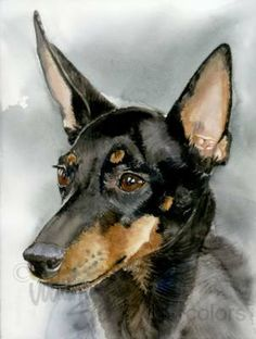 TOY MANCHESTER Terrier Dog Portrait Watercolor Art by k9stein, $22.50
