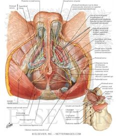 Right Pelvic Pain in Men - Bing Images
