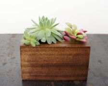Containers & Planters in Outdoors & Garden - hopgo.com.vn