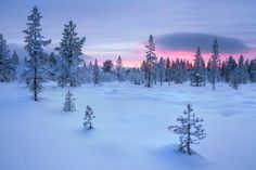 Taiga Forest, Finland by Simon Byrne on 500px