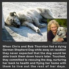 I pray that there will be more of these act's of kindness. Just feeding this dog was nice, they really went the extra mile by flying her to their home. What an  inspiration to everyone.