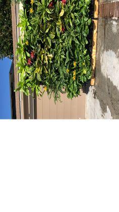 Expandable Green Wall with Built-in Micro Dripper – Single - Garten Design Ideen Vertical Garden Wall, Vertical Planter, Verticle Herb Garden, Garden Wall Planter, Living Wall Planter, Vertical Succulent Gardens, Succulents Garden, Garden Wall Designs, Magic Garden