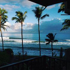 beach, summer, and palm trees image Tropical Vibes, Tropical Paradise, Laguna Beach, Ocean Beach, Palm Tree Images, California Surf, Southern California, Portugal Travel, Hawaii Travel