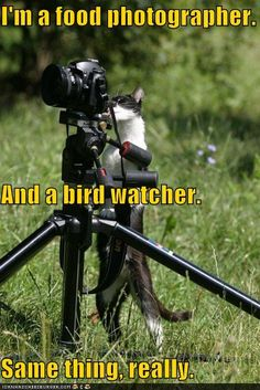 Cat photographer!