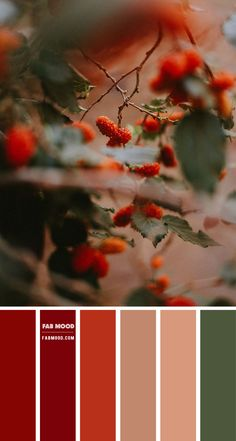 Color inspiration images Archives 2 - Fab Mood | Wedding Colours, Wedding Themes, Wedding colour palettes Sage Color Palette, Taupe Color Palettes, Pantone Colour Palettes, Color Schemes Colour Palettes, Winter Colour Palette, Color Palette Challenge, Terracotta, Mood Colors, Earth Tone Colors