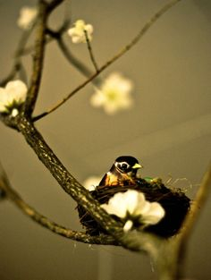 The birdies in the treetops, sing their song…