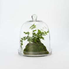 Glass Bell Cloche in Gardening PLANTERS Terrariums Vessels at Terrain