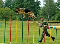 This pup has skills! It's amazing what our military working dogs and their handlers are capable of. Respect!   https://loveahero.com