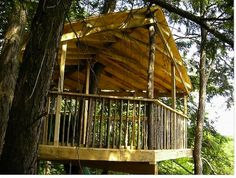 The Coolest Tree House (Gallery)
