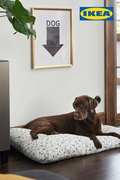 Get up to 15% off beds (including beds for our pets!) at the IKEA Bedroom Event, on now until September 23. See IKEA.ca for details. Ikea Bedroom, Diy Bedroom Decor, Diy Home Decor, Inspire Me Home Decor, Christmas Mantels, Red Christmas, Ikea Dog, Decoration Ikea, Purple Home