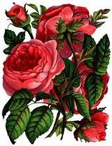 flores-lindas.jpg