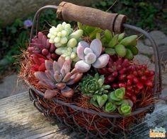 Para este pequeno arranjo de suculentas, o ideal é usar fibra de coco.