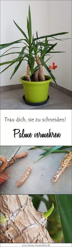Aline Stüwe (alinestuewe25) on Pinterest
