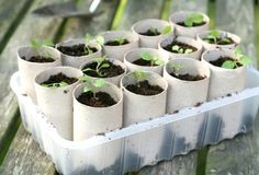 Use toilet paper rolls to start your plant seeds. When they are ready for planting stick the whole roll in the ground and it will decompose.