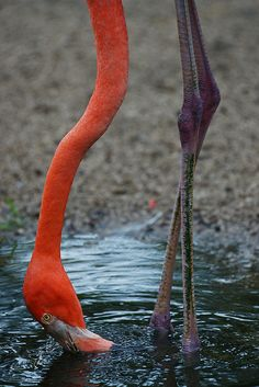 Flamingos, Flamingo Gardens by Dave 2x on Flickr.