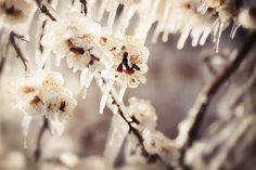 www.frostedproductions.com | #utah #photographer #natural #light #photography #spring #blossoms #icicles #branches