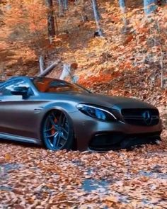 Mercedes Benz AMG Display In The Woods
