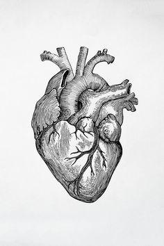 Original Body Drawing by Mila Kruk Heart Anatomy Drawing, Human Anatomy Art, Body Drawing, Human Heart Drawing, Heart Anatomy Tattoo, Anatomical Heart Drawing, Medical Illustration, Illustration Art, Art Drawings Sketches