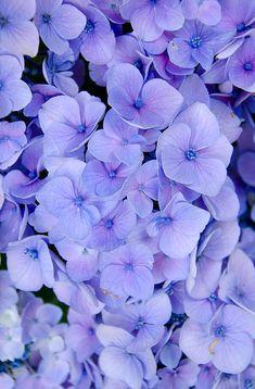 Purple Flowers Wallpaper, Purple Wallpaper Iphone, Flower Background Wallpaper, Beautiful Flowers Wallpapers, Flower Phone Wallpaper, Purple Backgrounds, Flower Backgrounds, Pretty Wallpapers, Aesthetic Iphone Wallpaper