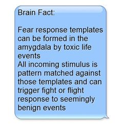 Brain Fact: Fear response templates can be formed in the amygdala by toxic life events All incoming stimulus is pattern matched against those templates and can trigger fight or flight response to seemingly benign events