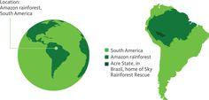 amazon rainforest map - Google Search