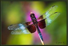 Pink // Cyrus Khamak // Flickr