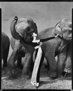 Richard Avedon - Dovima with elephants, evening dress by Dior, Cirque d'Hiver, Paris, August 1955