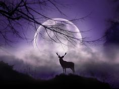 In the Light of the Moon by Jenny Woodward on 500px