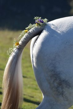 Flowers in Pippa's tail.  Gorgeous country wedding location near Sydney, NSW. http://www.chapmanvalleyhorseriding.com/australian-country-horseback-wedding/   White horse. Horseback wedding. Romantic wedding. Outdoor wedding. Unique wedding. Braided tail. Wedding Ideas. Horse tail. Baby's breath