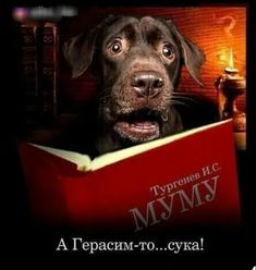 Funny Phrases, Adult Humor, Labrador Retriever, Dogs, Animals, Labrador Retrievers, Funny Taglines, Animales, Animaux