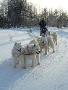 LumiNenä Holiday Resort