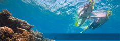 Cairns Great Barrier Reef Live Aboard Trip / Overnight Snorkel and Dive Tours lots of info