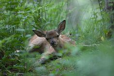 Parco naturale Paneveggio in Val di Fassa.  Particolarmente conosciuto per gli insoliti animali presenti quali scoiattoli e cerbiatti.